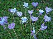 Bílé a fialové zápichy srdce,