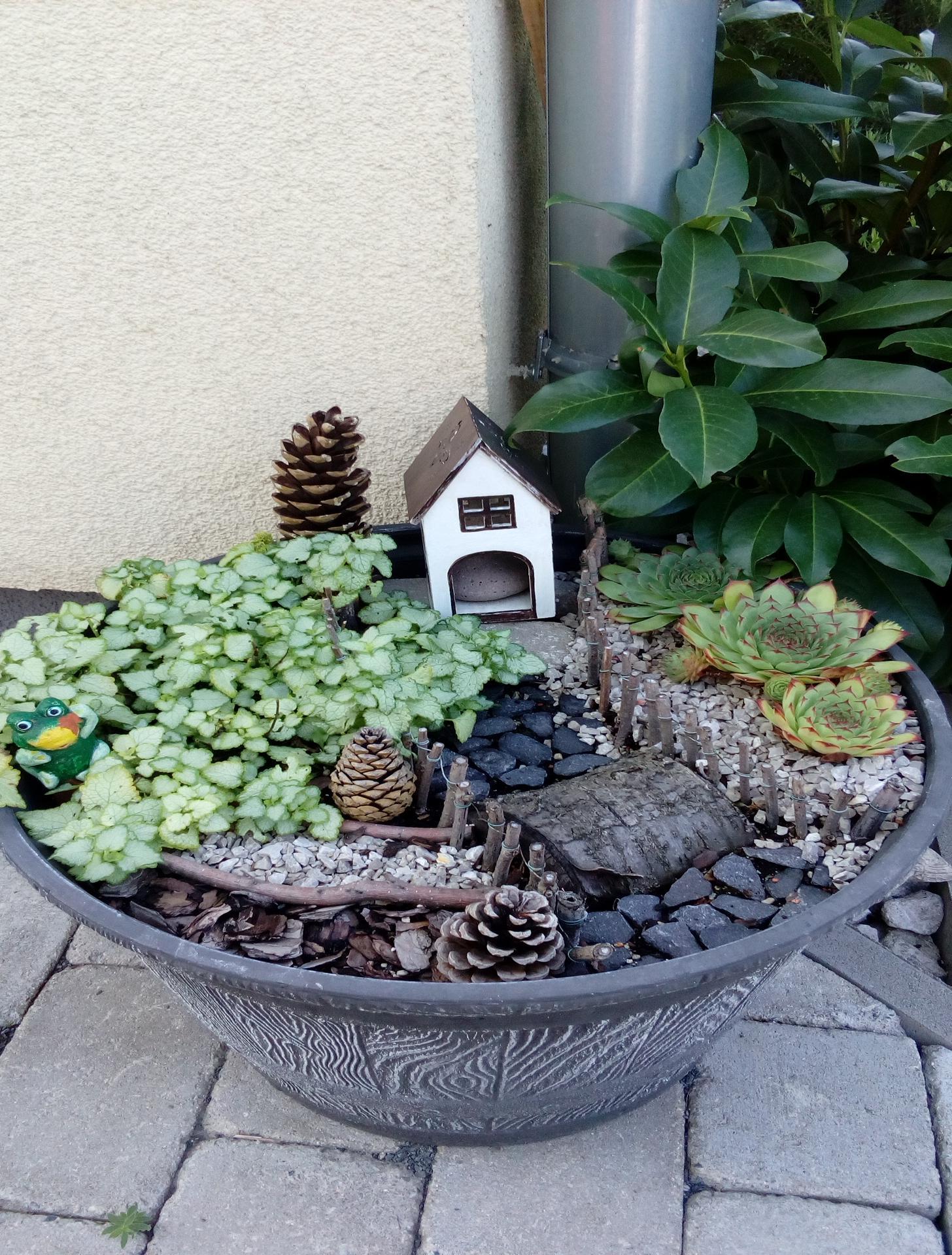 Môj rok v záhrade - Obrázok č. 1
