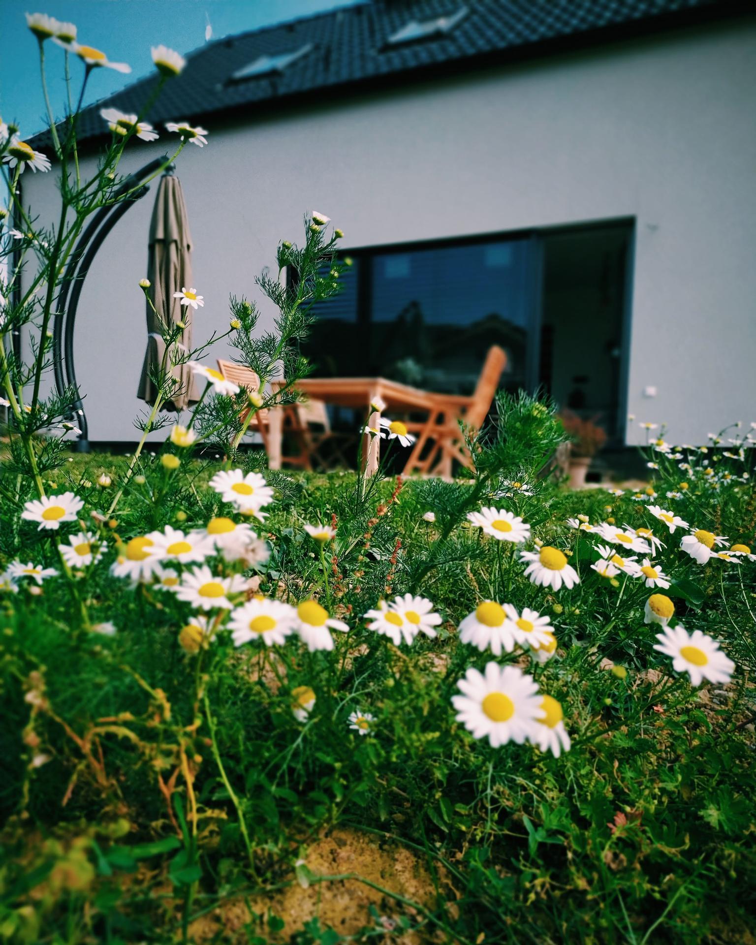 Náš domov ve svahu - Oku lahodící plevel :D