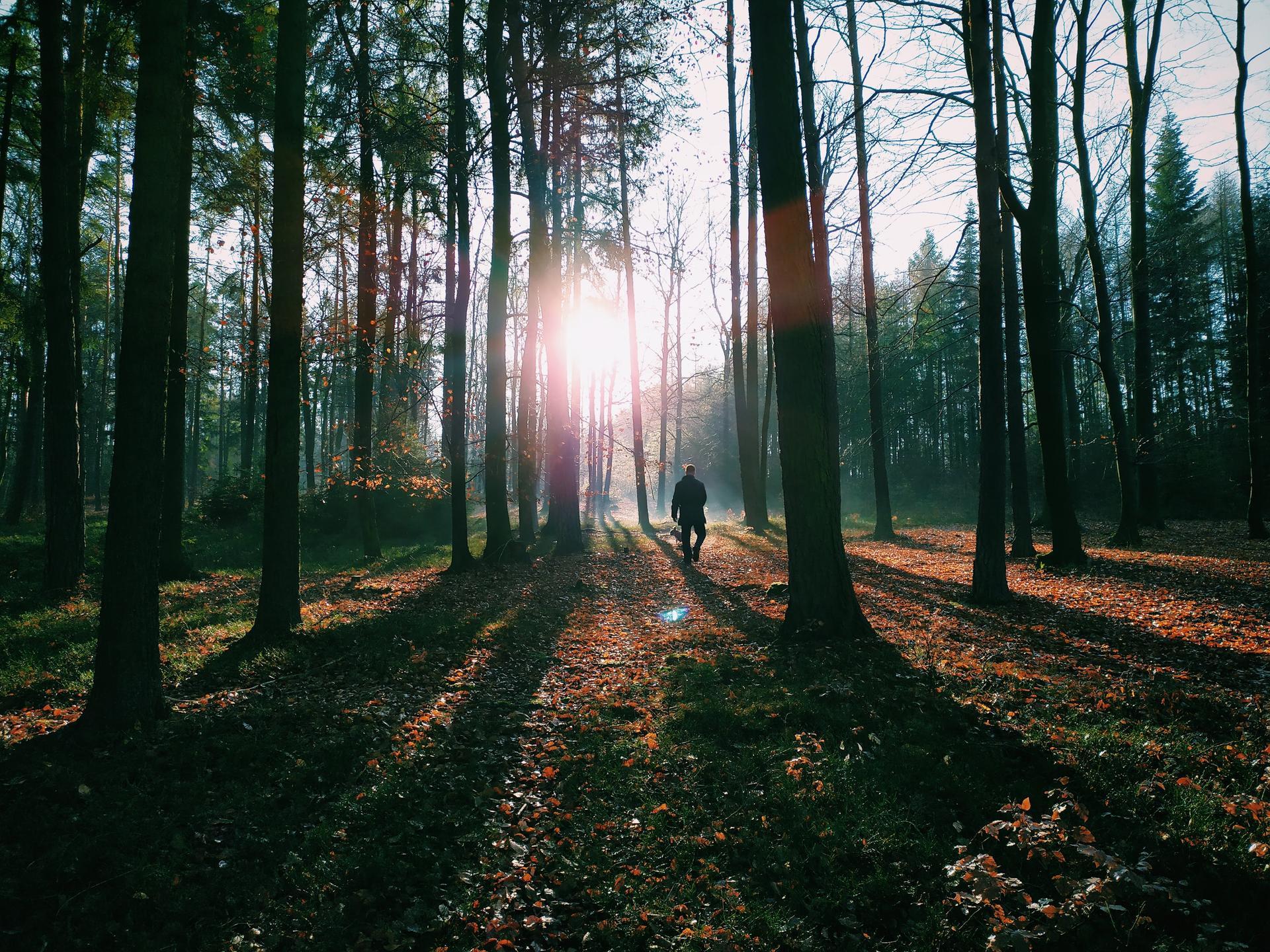 Náš domov ve svahu - U nás v lese