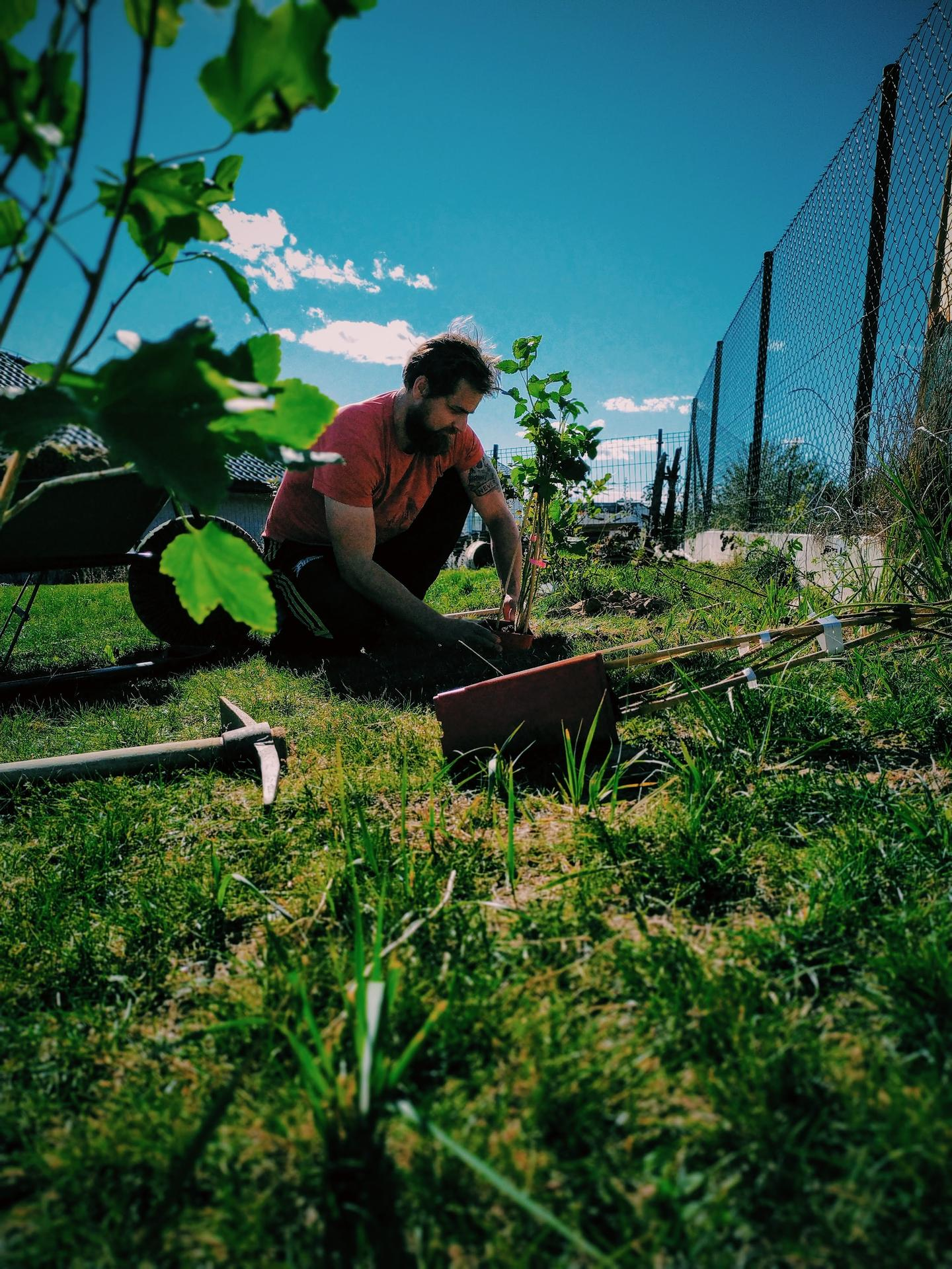 Náš domov ve svahu - Konečně jsme se dostali do zahradnictví a nakoupili  stromky a keře. Za prvé jsme chtěli rozšířit jedlou část zahrady, a tak jsme koupili dva druhy malin (klasickou a žlutou stále-plodící), malino-ostružinu, červený rybíz a dva druhy angreštů ...