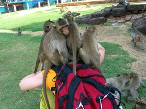 Víc než 5 opic jsem na batohu neunesla. Potvory, ale byl to zážitek.