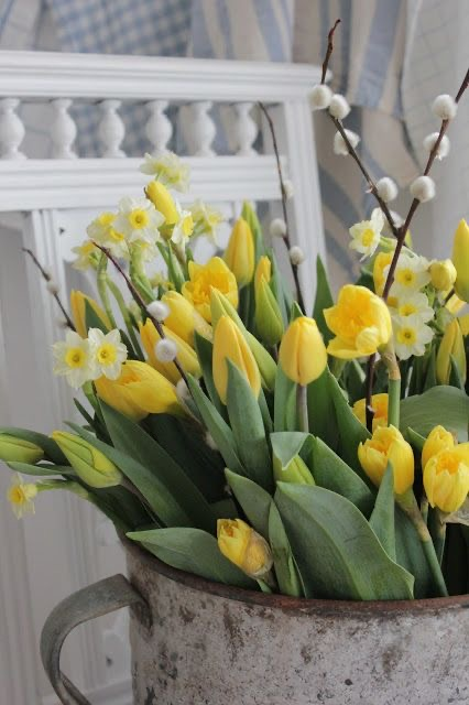 Prvý jarný deň sme mali včera a my sme sa rozhodli, že Vám trošku priblížime, čo si to na nás príroda na #jar pripravila 🙂  Aké nádhery nám začínajú rašiť zo zeme, a ako tu krásu vieme použiť nielen u seba #doma, alebo aj na svadbe.   Viac sa dozviete u nás na blogu:  https://www.easywedding.sk/blog/privitajme-spolu-jar/  #svatebniinspirace #svadobneinspiracie #svadba2021 #marec #svadbapreteba #svadba #svatba #blog #svadobnyblog #jarnekvety #jarneinspiracie  #tupipan #narcis - Obrázok č. 2