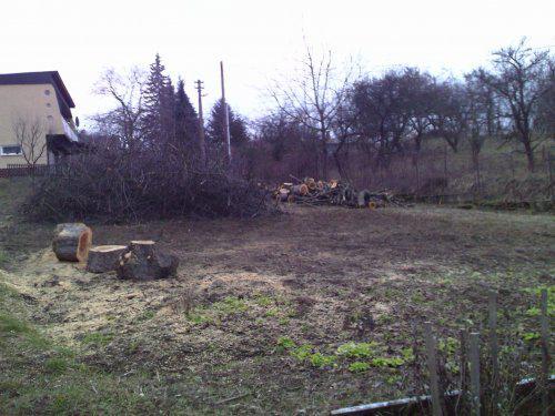 Začíname... - Rezanie stromov