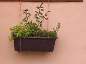 můj bylinkový truhlíček