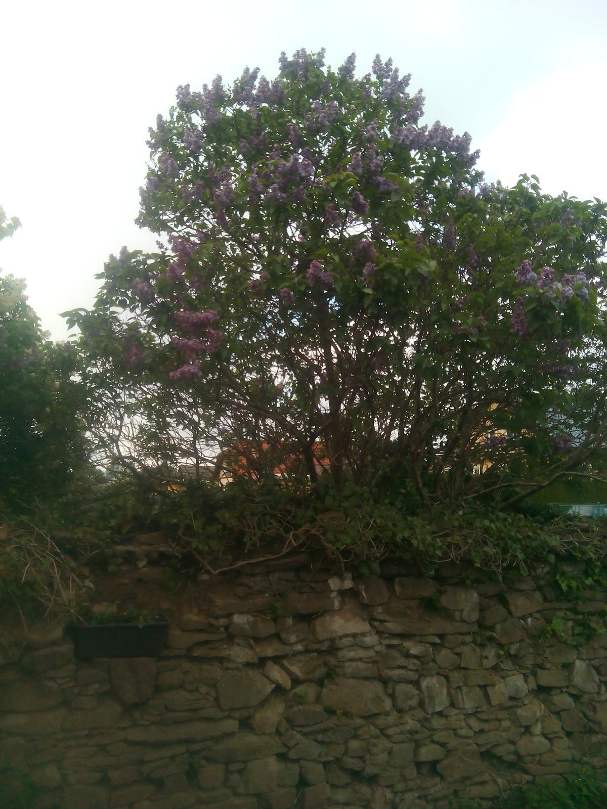 Zahrada - Obrázek č. 48