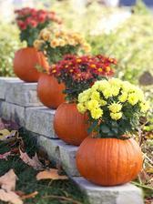 Jesenne kvety napr. chryzantemy, ktore mame vo vaze alebo v kvetinaci osadime do tekvicovych podstavcov