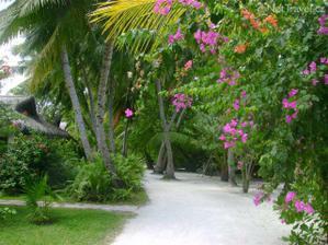 krásné tropické zahrady