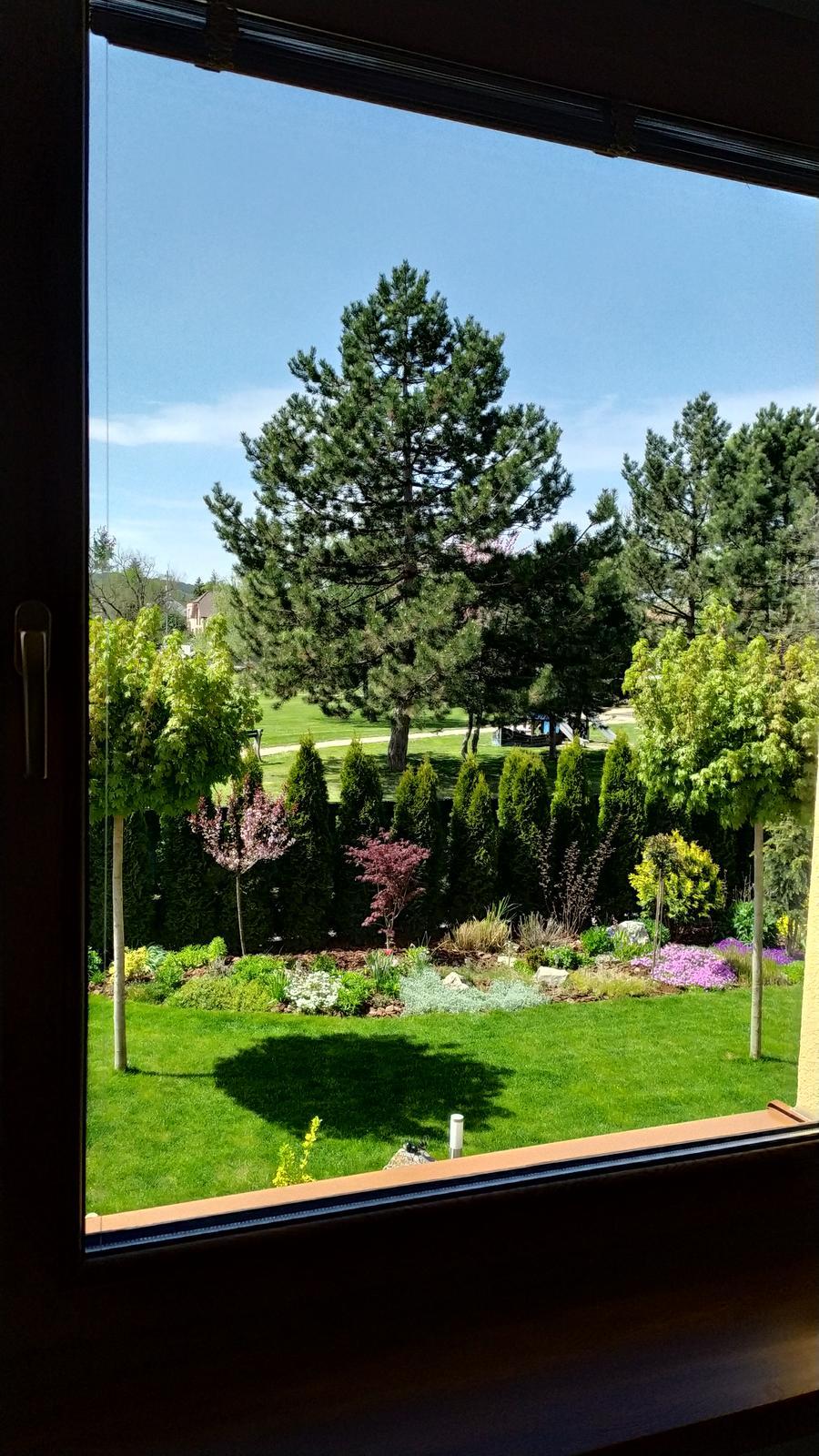 2021 - Pohľad cez obývačkove okno 🥰. Ešte to len vylieza zo zeme, ale aspoň floxy to tam oživia