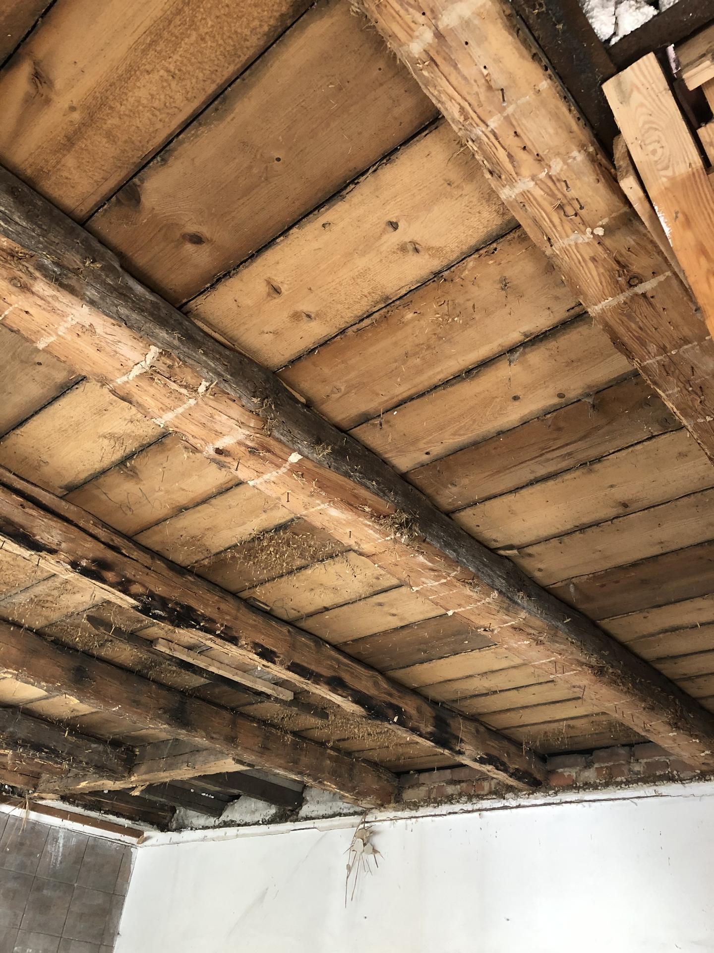 Tak i my jsme se dočkali 🏡❤️⚒ - Říká se, že starší domy mají svoje kostlivce. Hm, my jsme toho prvního odhalili zrovna dneska. Shodili jsme rákosový strop v obýváku v přízemí, ale čekalo nás překvápko v podobě shnilých, prolezlých a prohnutých trámů. Všechny je musíme vyměnit.