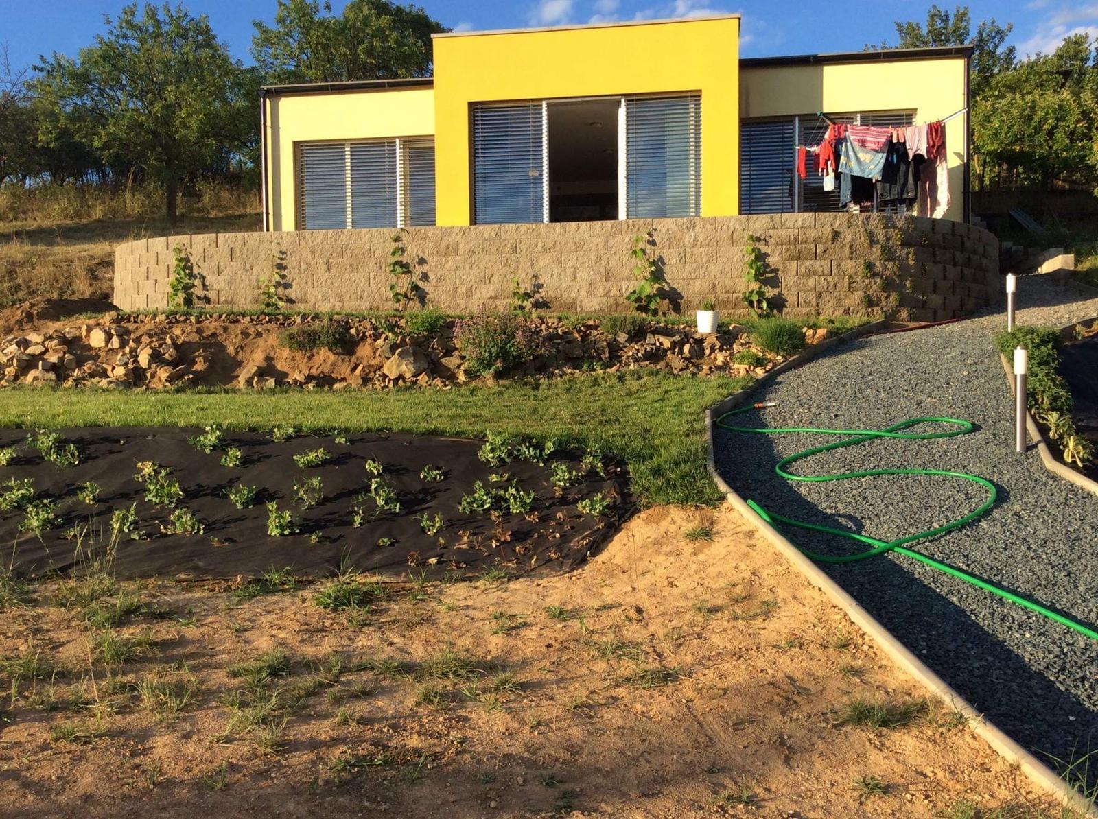 Skřítčí zahrada 2015 - 2020 - Červenec 2018 (podvečer) - zídka je komplet, bylinková skalka je hotová tak z 1/3, 2 terasy jsou oseté trávou, vinná réva roste, na místě jahod zatím roste hrášek