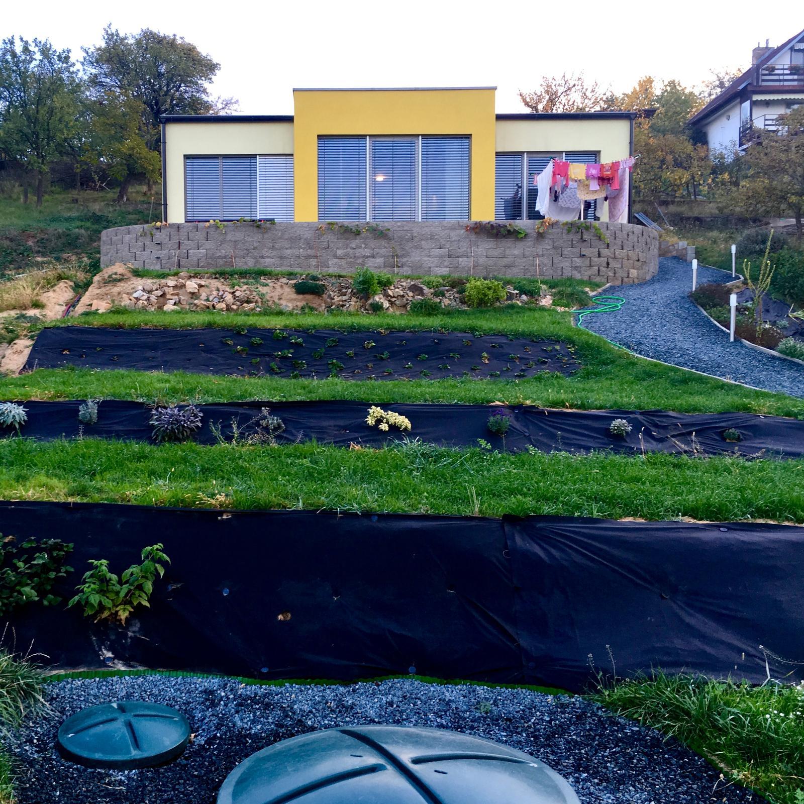 Skřítčí zahrada 2015 - 2020 - Říjen 2018 (ráno) - terasy se zelenají trávou, bylinky (skalkové + šalvěje a levandule níže) zdárně rostou, manželem posekané maliníky a ostružiníky obrazily, réva a jahodníky ožrané srnami se drží, zasázeny první rostliny do budoucí květinové skalky