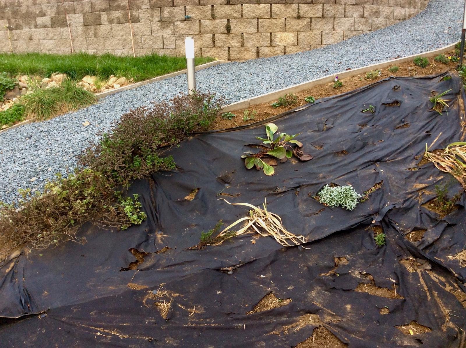 Skřítčí zahrada 2015 - 2020 - Listopad 2018 - tady bych chtěla mít květinovou skalku, něco jsem už do země zapíchala a na jaře se uvidí, co a kolik bude potřeba dosázet, taky oddělám geotextílii a začnu usazovat kameny