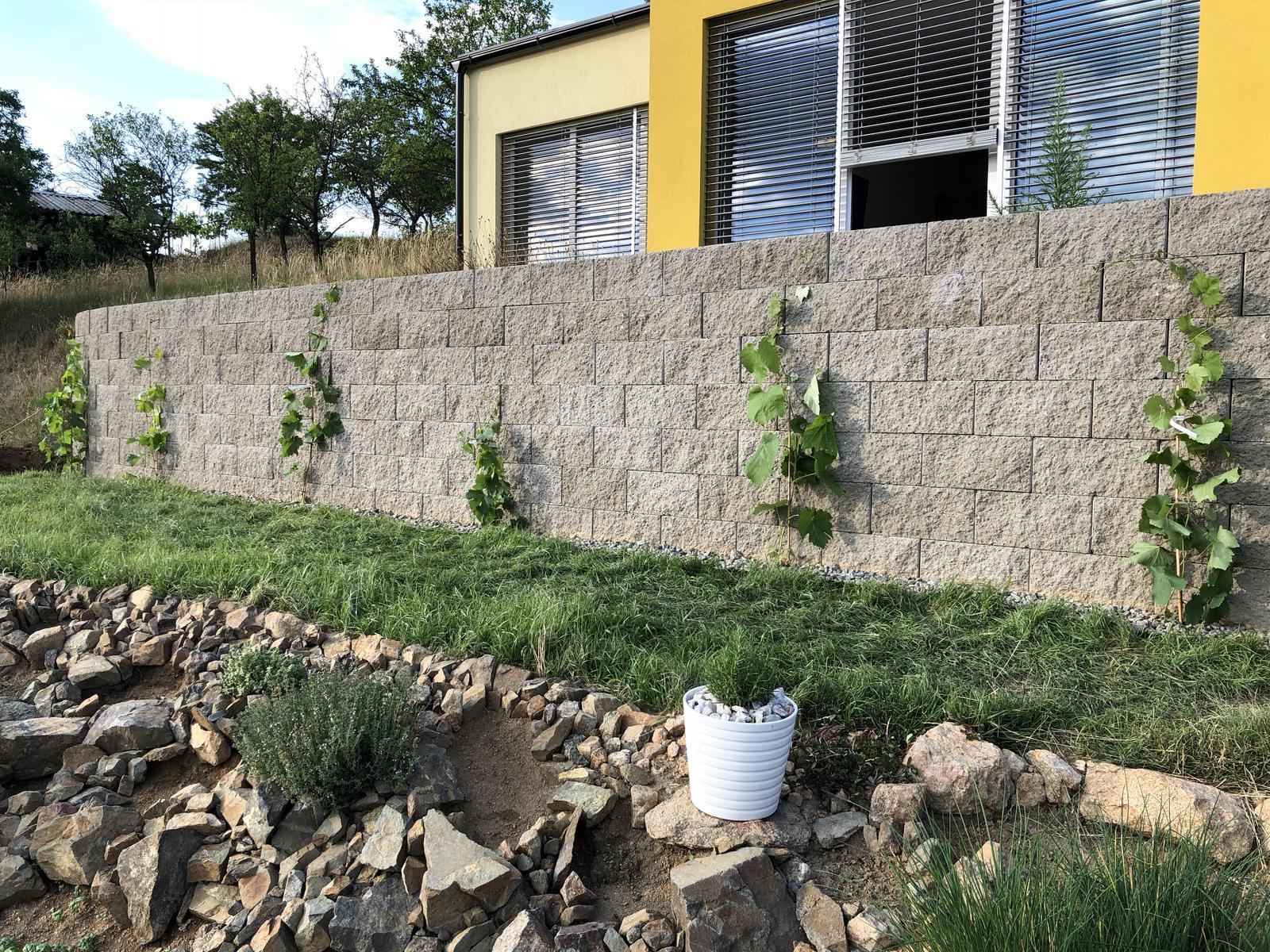 Fáze druhá ... zahrada - Červen 2018 (ráno) - trávníku se jakžtakž daří, čerstvě je zasazena vinná réva