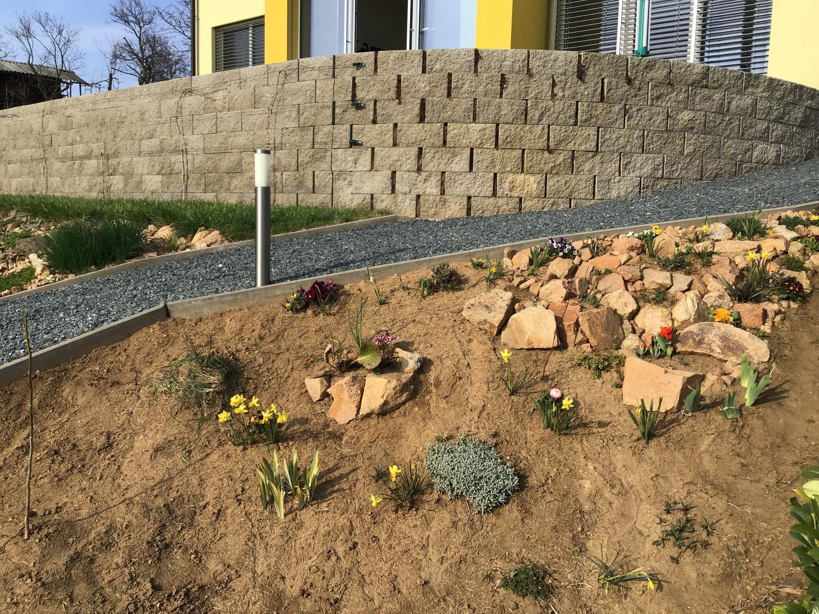 Fáze druhá ... zahrada - Duben 2019 - rostliny raší a tedy jsou vidět, tak pokračuju v budování květinové skalky, zasadila jsem červený dlanitolistý javor, magnólii, damašskou růži, primule a velkokvětou sedmikrásku