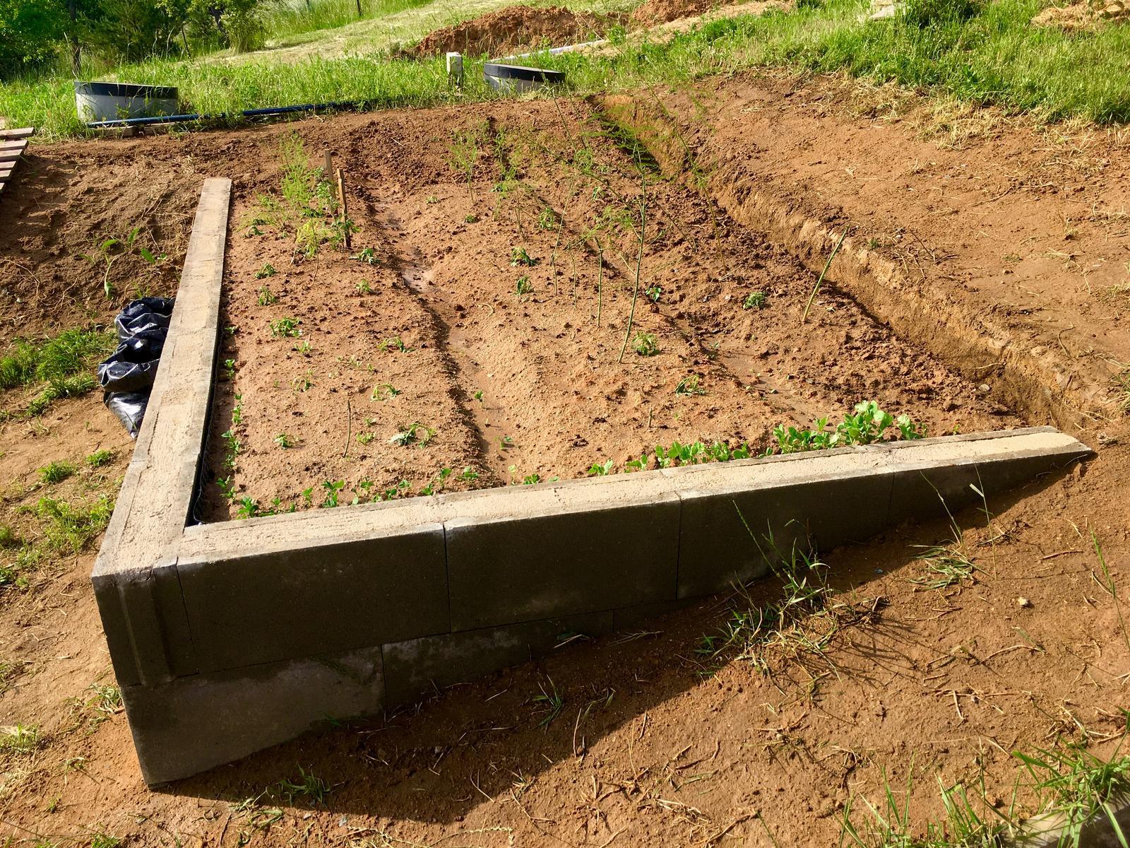 Skřítčí zahrada 2015 - 2020 - Červen 2019 - první vyvýšený záhon je hotový, rašící hrášky byly objeveny stnami a tak půjdou stejně jako jahody pod síť