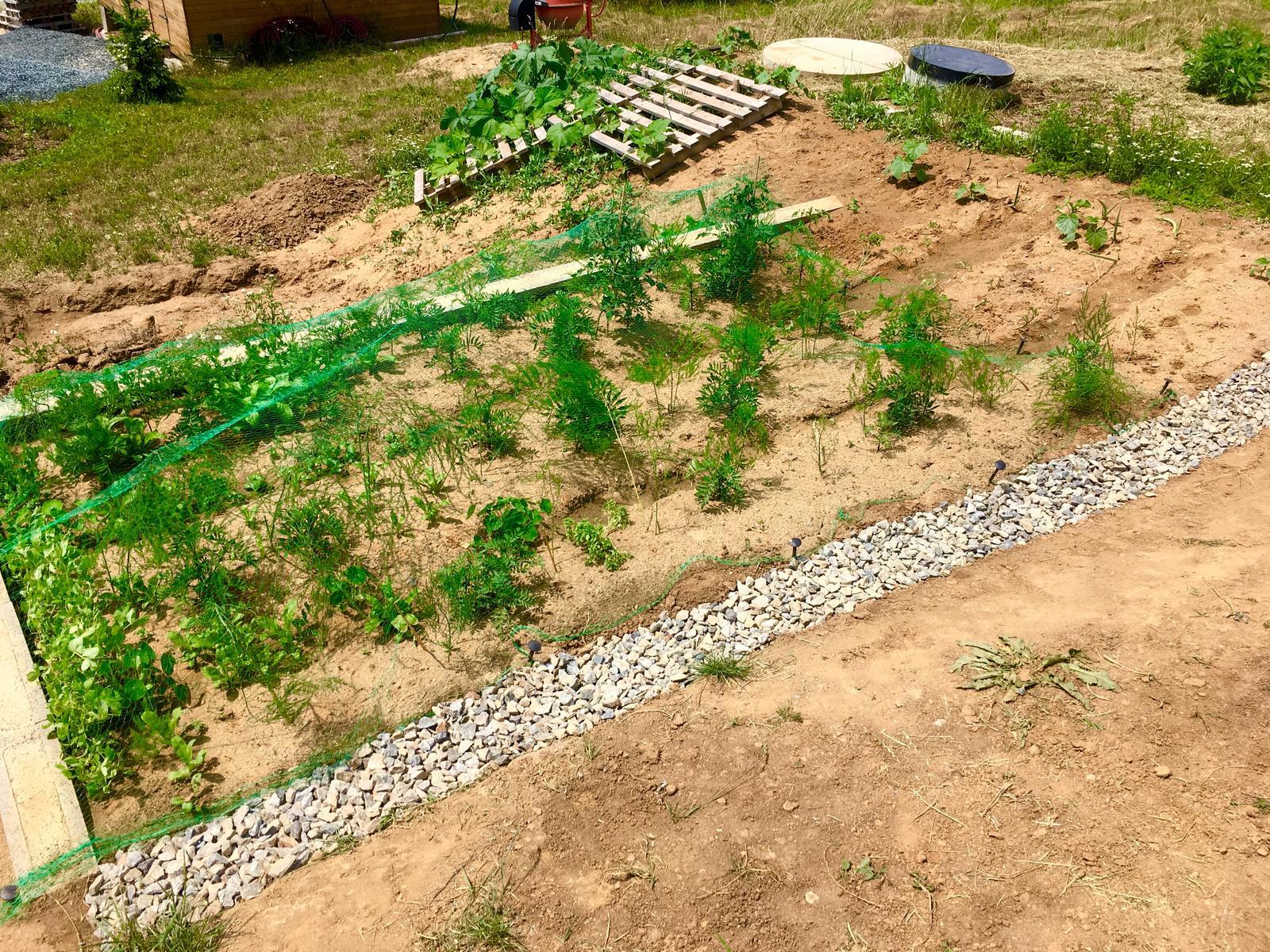 Skřítčí zahrada 2015 - 2020 - Červenec 2019 - v záhonu roste převážně jedlá multikultura, aneb zaujala jsem taktiku, že čím víc konzumovatelných rostlin, tím míň plevele