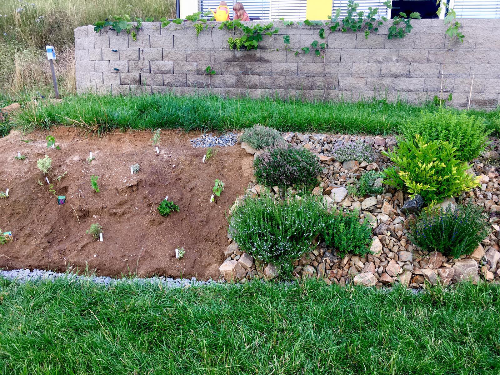 Fáze druhá ... zahrada - Červenec 2019 - nebyl to záměr, ale při dodělávání bylinkové skalky vzniklo porovnání před (vlevo, sázím teď) a po (vpravo, osázeno loni)