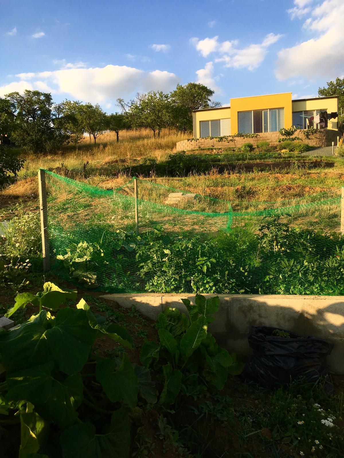 """Skřítčí zahrada 2015 - 2020 - Červenec 2019 - posilovna, sauna a solárko v jednom, to je náš pozemek (Alan Chadwick - """"Zahradník netvoří zahradu. To zahrada tvoří zahradníka."""")"""