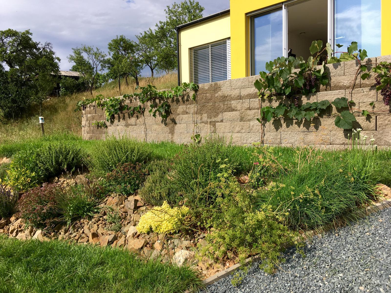 Skřítčí zahrada 2015 - 2020 - Srpen 2019 - bylinky a vinná réva, tomu se na našem JZ svahu daří skvěle