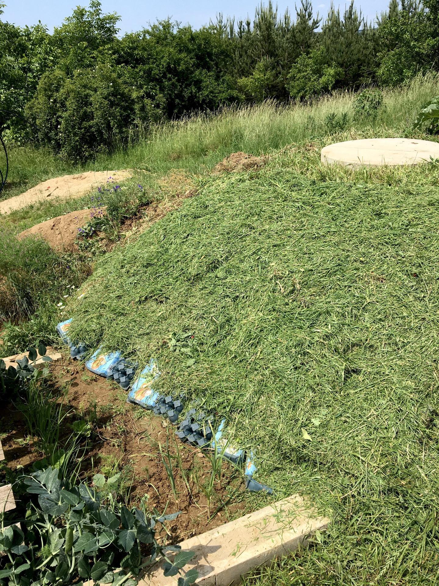 Fáze druhá ... zahrada - Červen 2020 - mulč z posekané trávy se osvědčil, toto místo je hodně zaplevelená, tak dospod přišly kartóny a plata od vajec