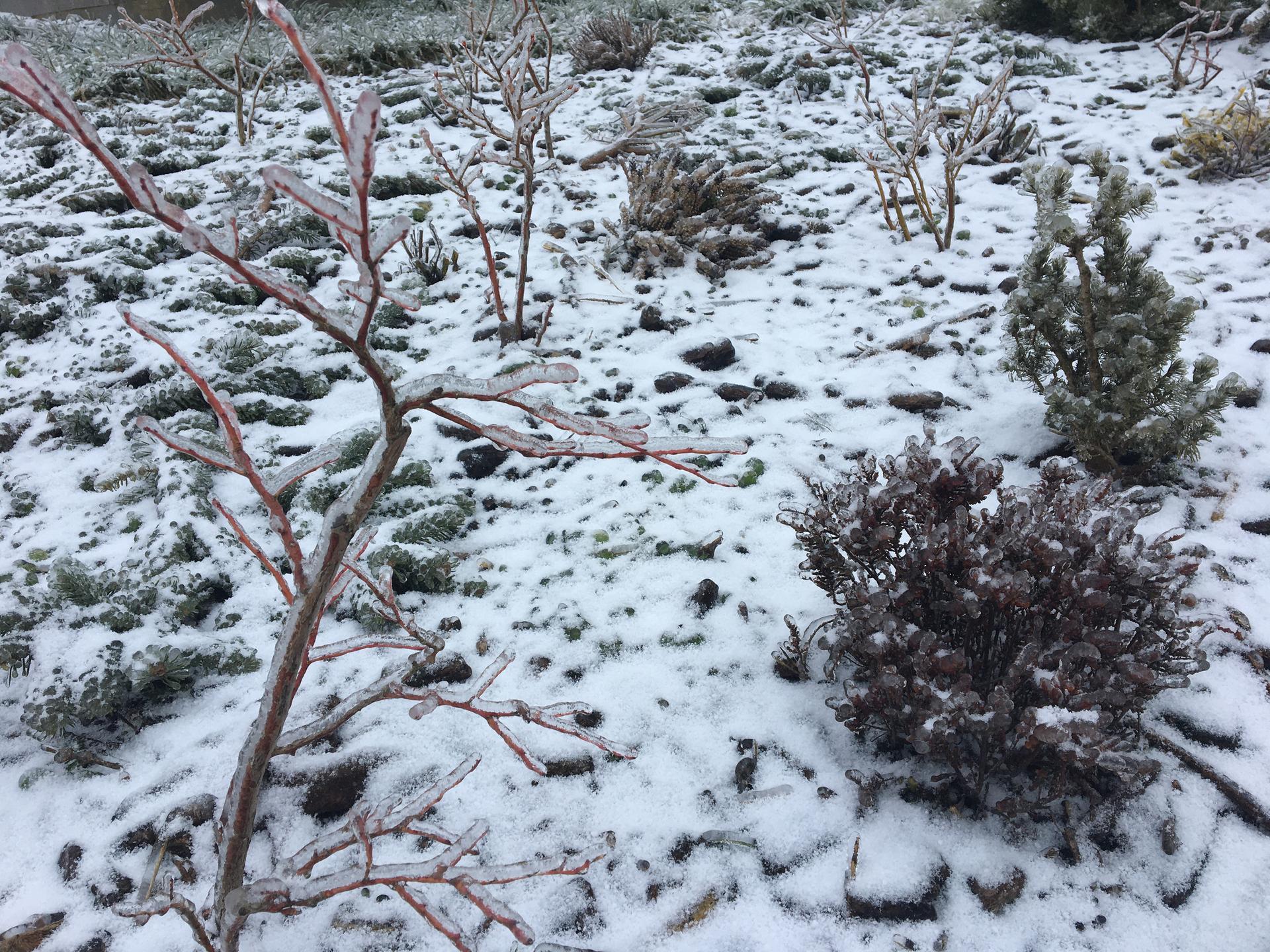 Skřítčí zahrada 2021 - Únor 2021 - vrstva ledovky
