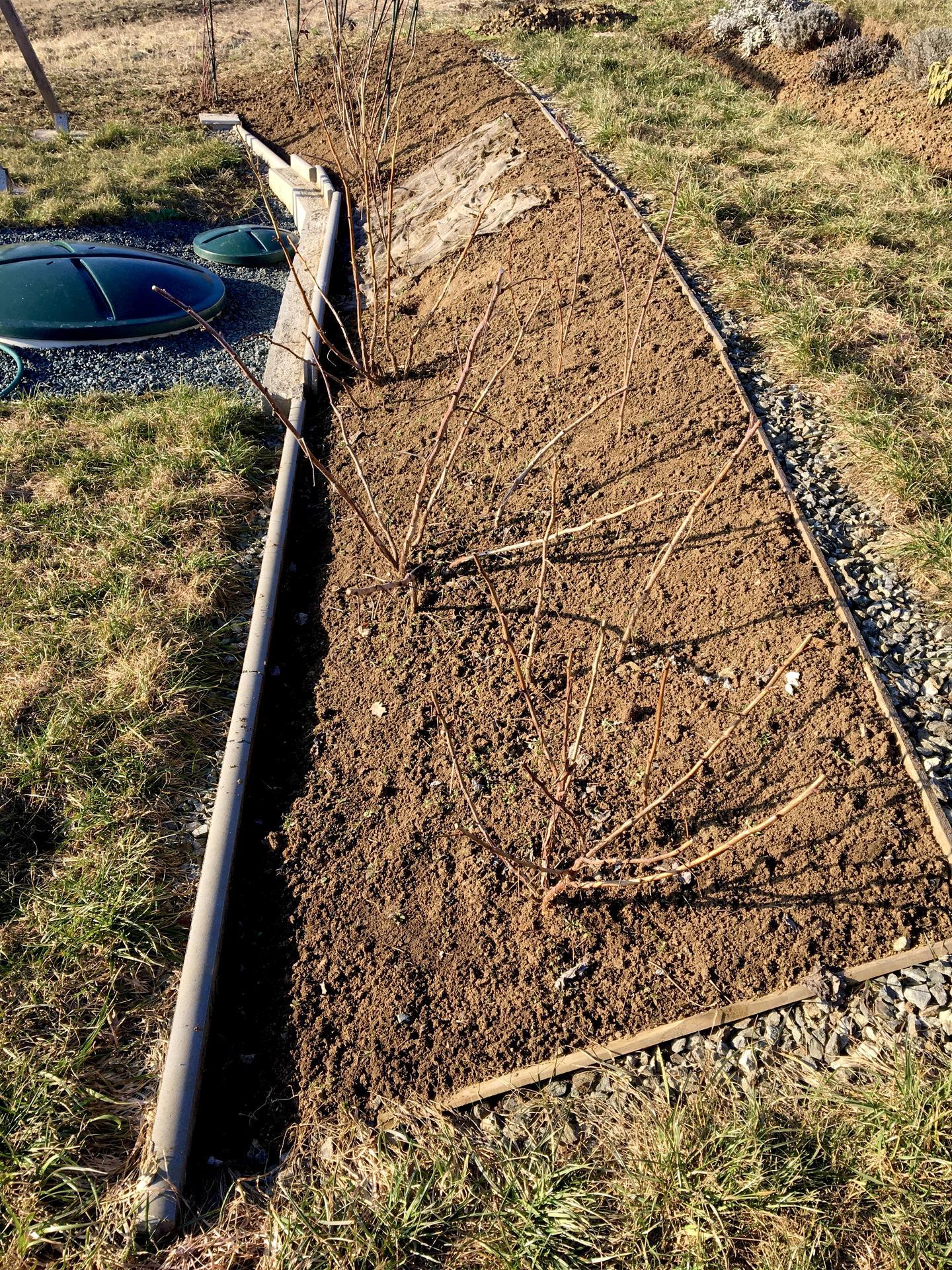 Skřítčí zahrada 2021 - Březen 2021 - letos bych chtěla maliníky a ostružiníky podsadit měsíčními jahodami a denivkami, možná přidám i řebříčky