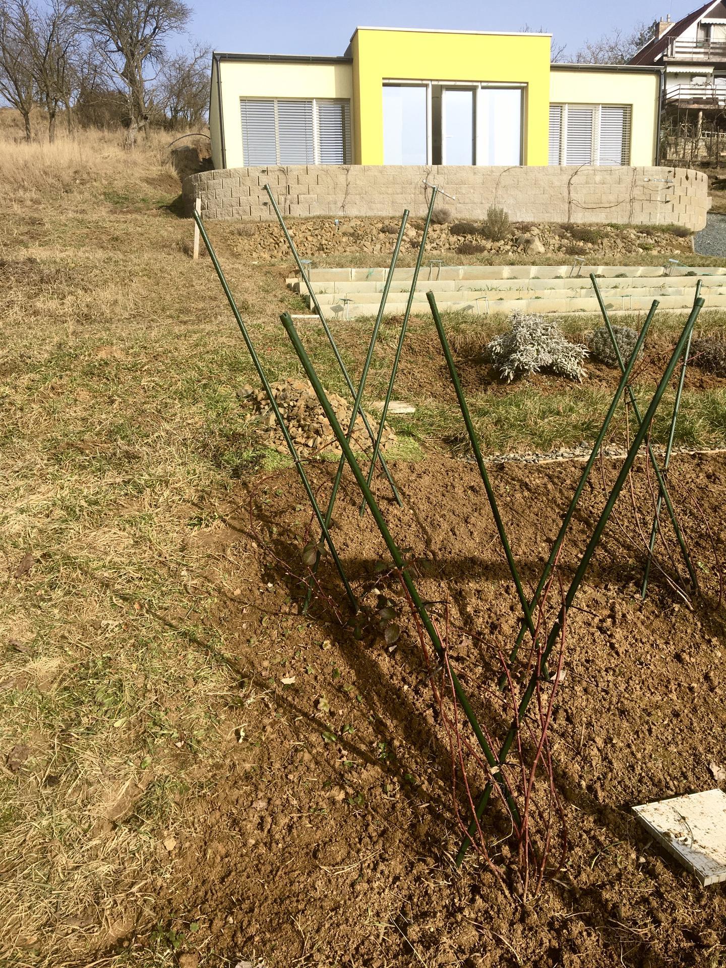 Skřítčí zahrada 2021 - Únor 2021 - využila jsem hezkého počasí, doladila sestřih maliníků a ostružiníků, vyplelala je a k okraji přepíchala lesní jahody