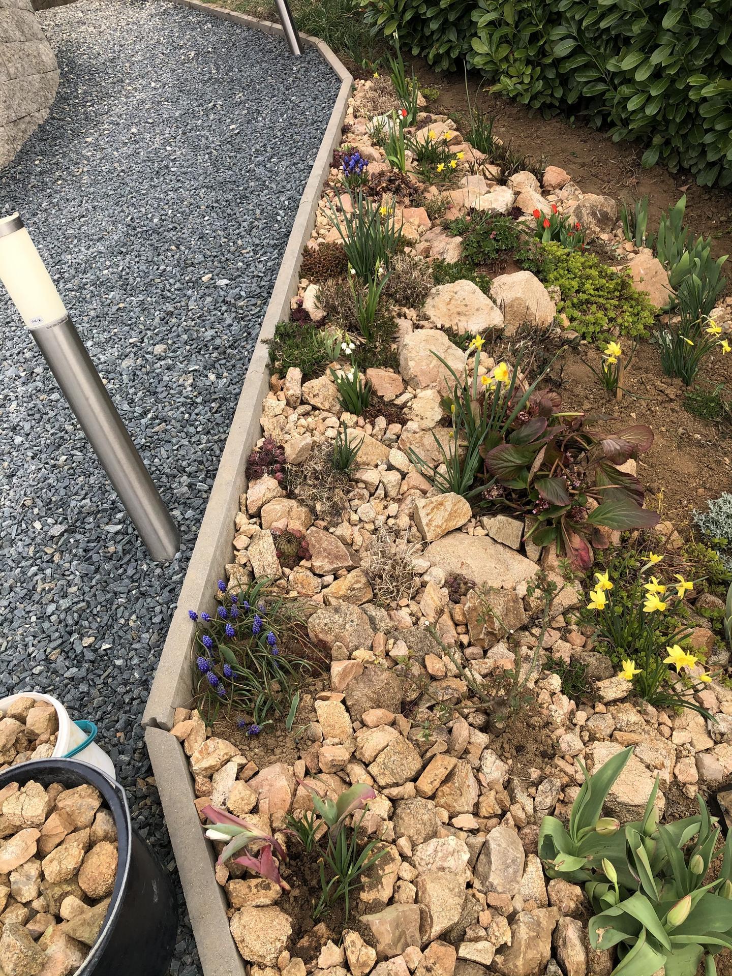 Skřítčí zahrada 2021 - Duben 2021 - na přelomu jara a léta do skalky doplním trvalky a na podzim bych ráda zasadila další cibuloviny