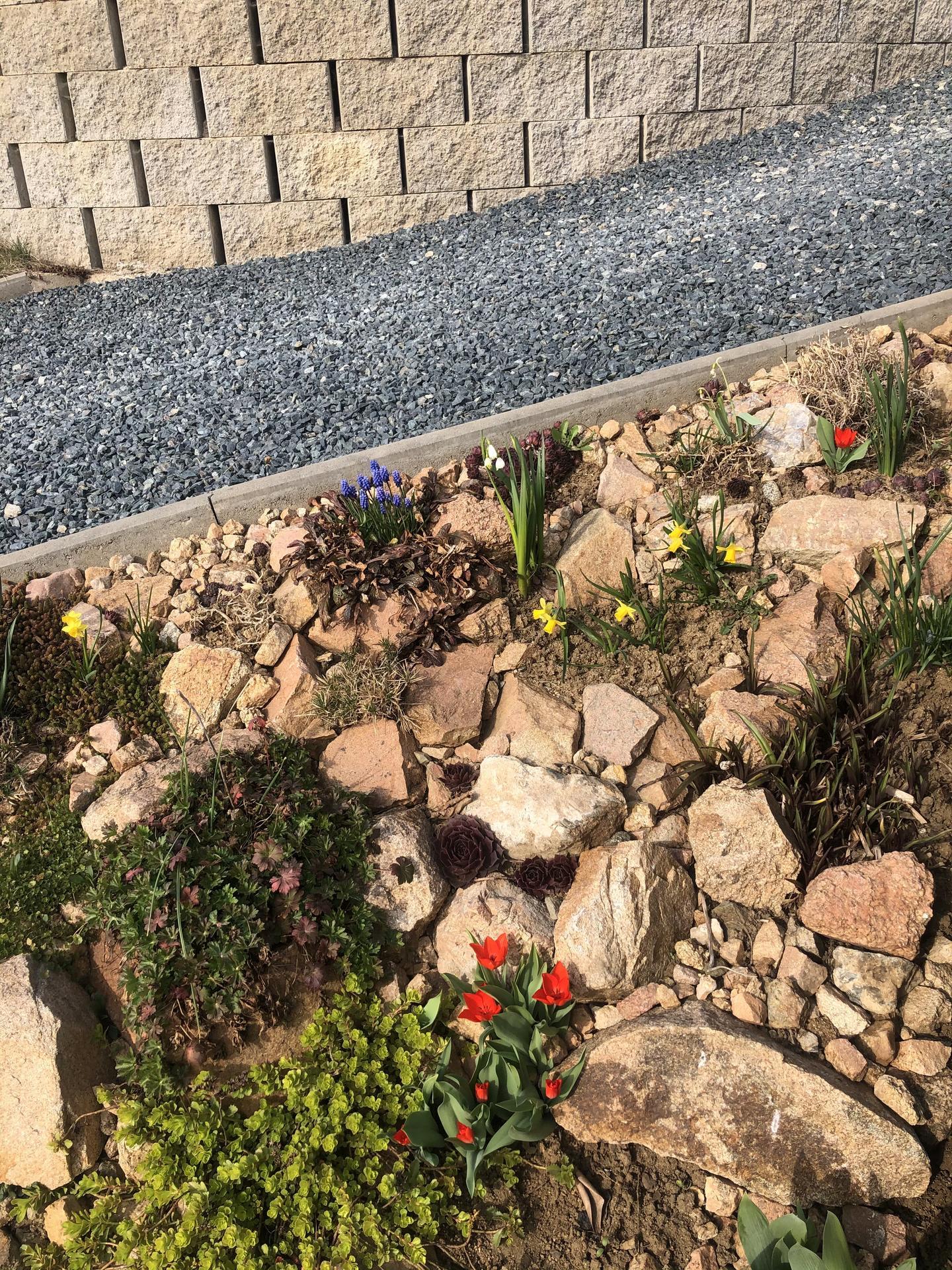Skřítčí zahrada 2021 - Duben 2021 - květinová skalka