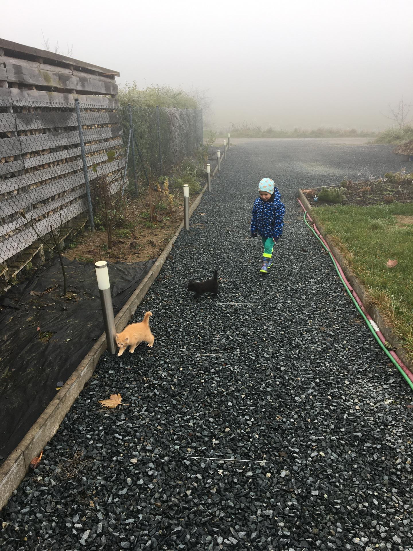 """Skřítčí zahrada 2015 - 2020 - Listopad 2020 - """"adoptovali"""" jsme dvě koťátka od toulavé kočky"""