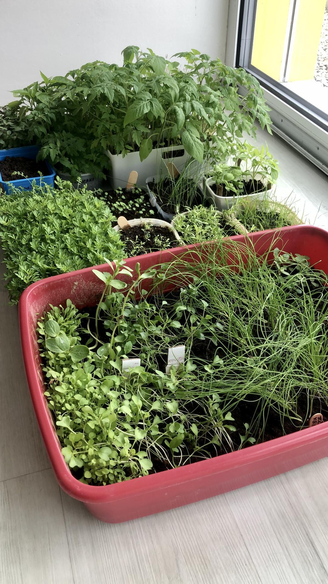 Skřítčí zahrada 2021 - Duben 2021 - sazenicím se letos daří výborně
