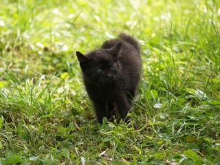 ahojte, dve čierne mačiatka... - Obrázok č. 1