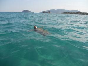 plavali jsme se želvičkami