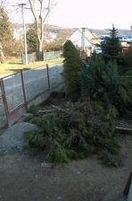 Na dvorku došlo  na likvidaci tůjek, no už byly staré...ovšem teď bojuju za záchranu těch dalších stromků :)