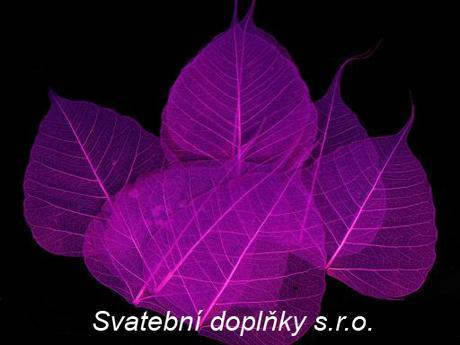 list fialový - 50 KS - Obrázek č. 1