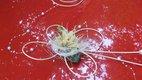 Dekorace na svatební auto - sada květ a 7 motýlků,