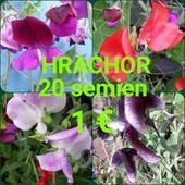 Hrachor,
