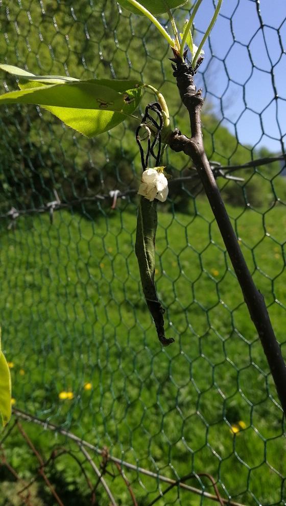 Zdravím všetkých záhradkárov ... - Obrázok č. 1
