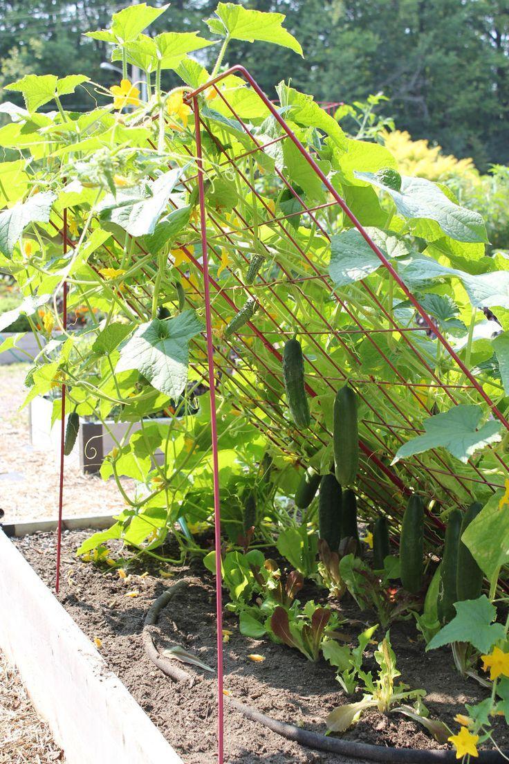 Zahrada - inspirace - Obrázek č. 135