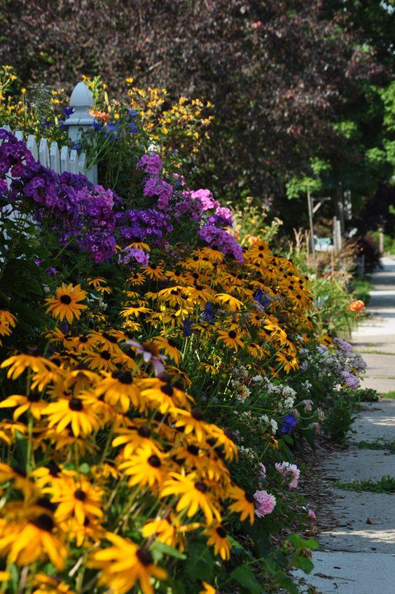 Zahrada - inspirace - rudbékie a u plotu fialové vysoké floxy