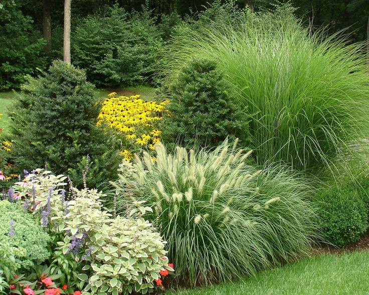 Zahrada - inspirace - vousatec mám zasazený, tak doufám, že jednou snad bude vypadat podobně :-)