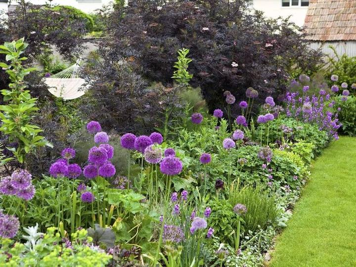 Zahrada - inspirace - česnek kam se podíváš