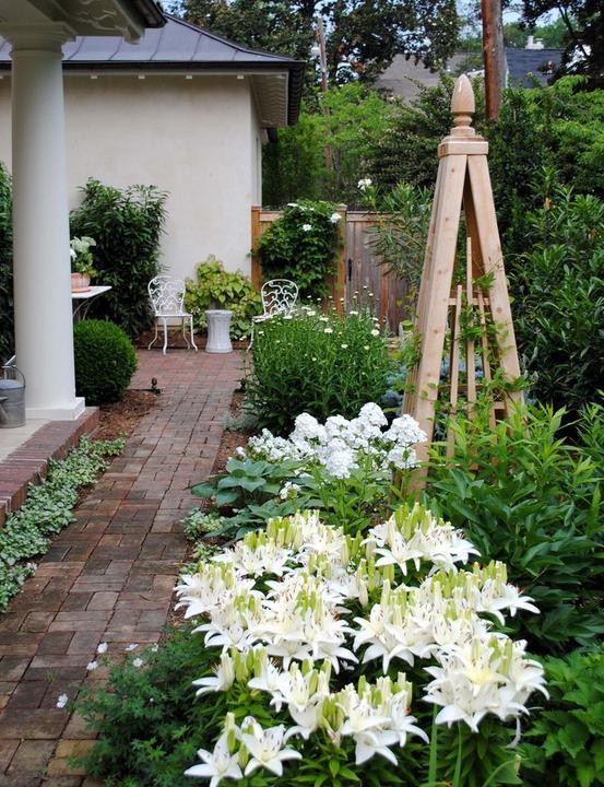 Zahrada - inspirace - Lílie už mám nakoupené :-) Bílé a žluté.