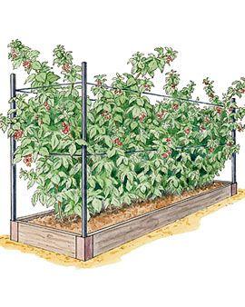 Zahrada - inspirace - plánuju na maliny ... 2021 stále jen plánuju :-)