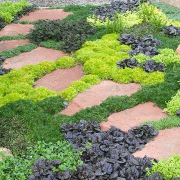 Zahrada - inspirace - tmavá kytka pravděpodobně zběhovec, světlé a tmavší bochánky úrazník (sagina)