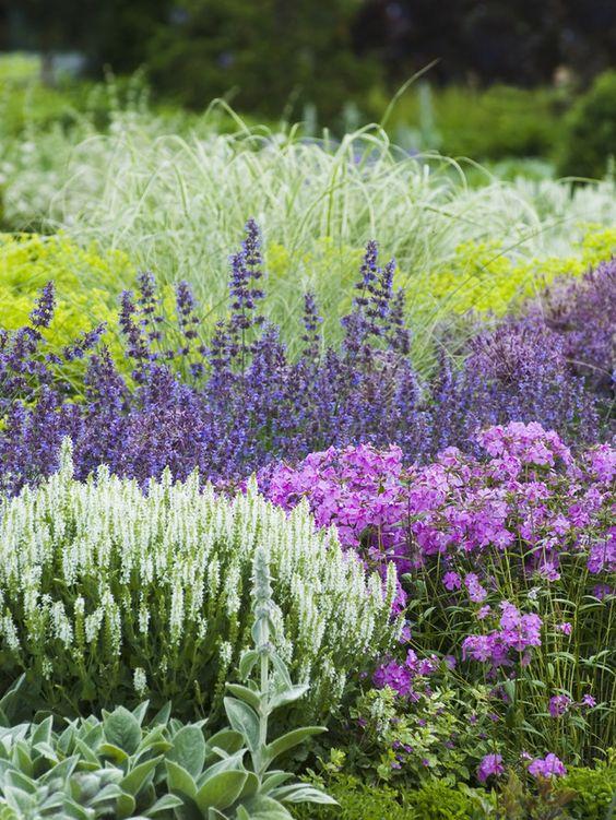 Zahrada - inspirace - zepředu: čistec, rozrazil, plamenka, vzadu to žlutozelené by mohl být kontryhel měkký, fialkové buď šanta nebo šalvěj ...
