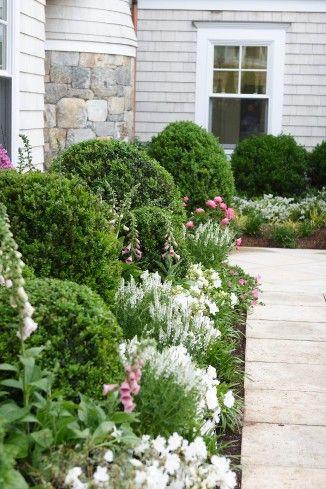 Zahrada - inspirace - náprstníky, buxusy, bílá šalvěj
