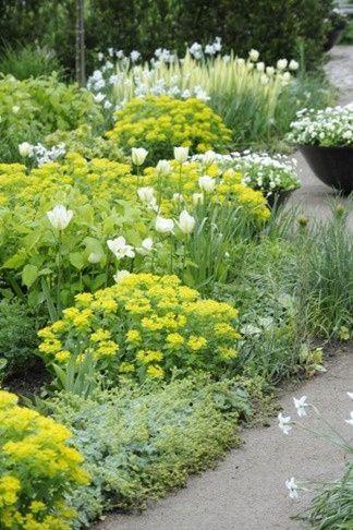 """Zahrada - inspirace - Hrozně se mi líbí pryšce .. ale mám strach, že by děti mohly chtít ty """"hezké kytičky"""" trhat do vázy :-/ Takže asi ještě nebude."""