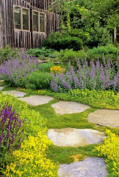 Zahrada - inspirace - Úrazník, rozchodník ostrý, šanta, šalvěj